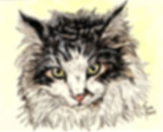 "Custom painted cat portrait of Gus, a black and white Maine Coon cat.  Acrylic & Pen & Ink painting on 5""x 7"" fine art paper by professional cat artist Fiona Purdy"