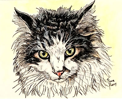 """Custom painted cat portrait of Gus, a black and white Maine Coon cat.  Acrylic & Pen & Ink painting on 5""""x 7"""" fine art paper by professional cat artist Fiona Purdy"""