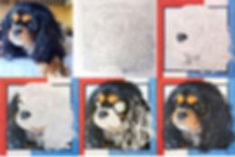 Pet Portrait Progression of Cavalier King Charles Spaniel Pet Portrait