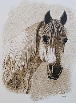 "Custom horse painting of Harmony an Arabian Mare by Horse portrait artist Fiona Purdy. Acrylic & Ink on 5""x 7"" fine art paper portrait"