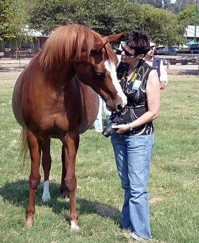 Arabian Horse Portrait Artist Fiona Purdy