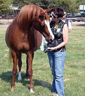 Fiona Purdy pet artist with Arabian Horse