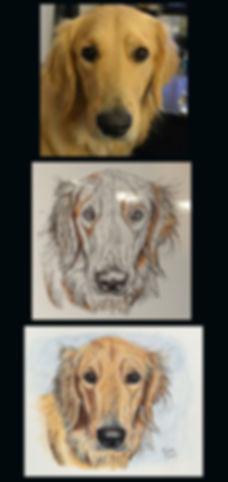 Golden Retriever Pet Portrait Progression