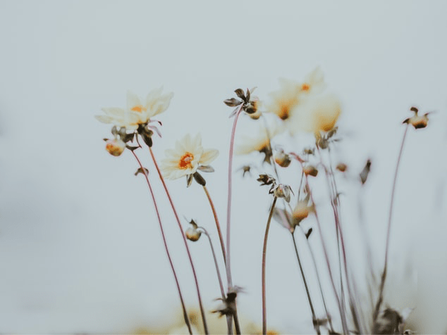 Yellow flowers with a white background. Photo by Annie Spratt on Unsplash.
