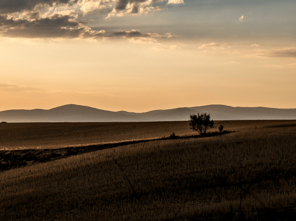 A field with a lone bush. Photo by Guillermo Álvarez.