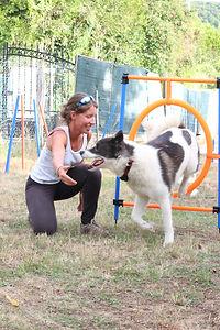 Agility chien de traineau