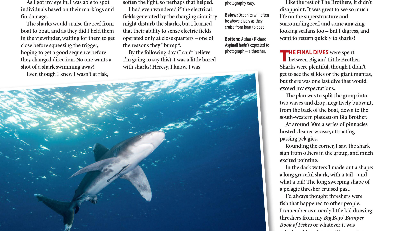 Red Sea sharks _ Aspinall-3