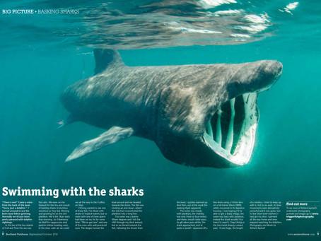 Basking Shark photo in Scotland Outdoors Magazine