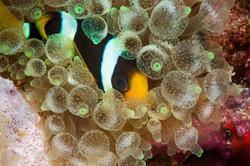 Underwater photo by Richard Aspinall