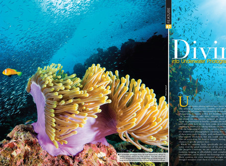 Diving into Underwater Photography