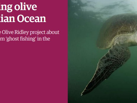 The Guardian: Saving Olive Ridley turtles of the Indian Ocean