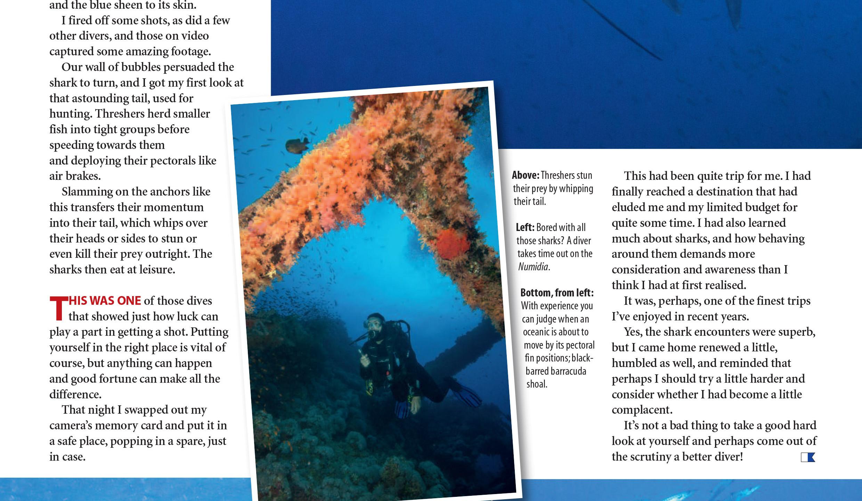 Red Sea sharks _ Aspinall-4