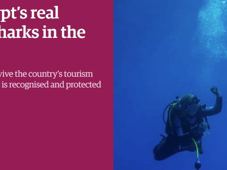 The Guardian: Egypt's real treasure: diving with sharks in the Red Sea
