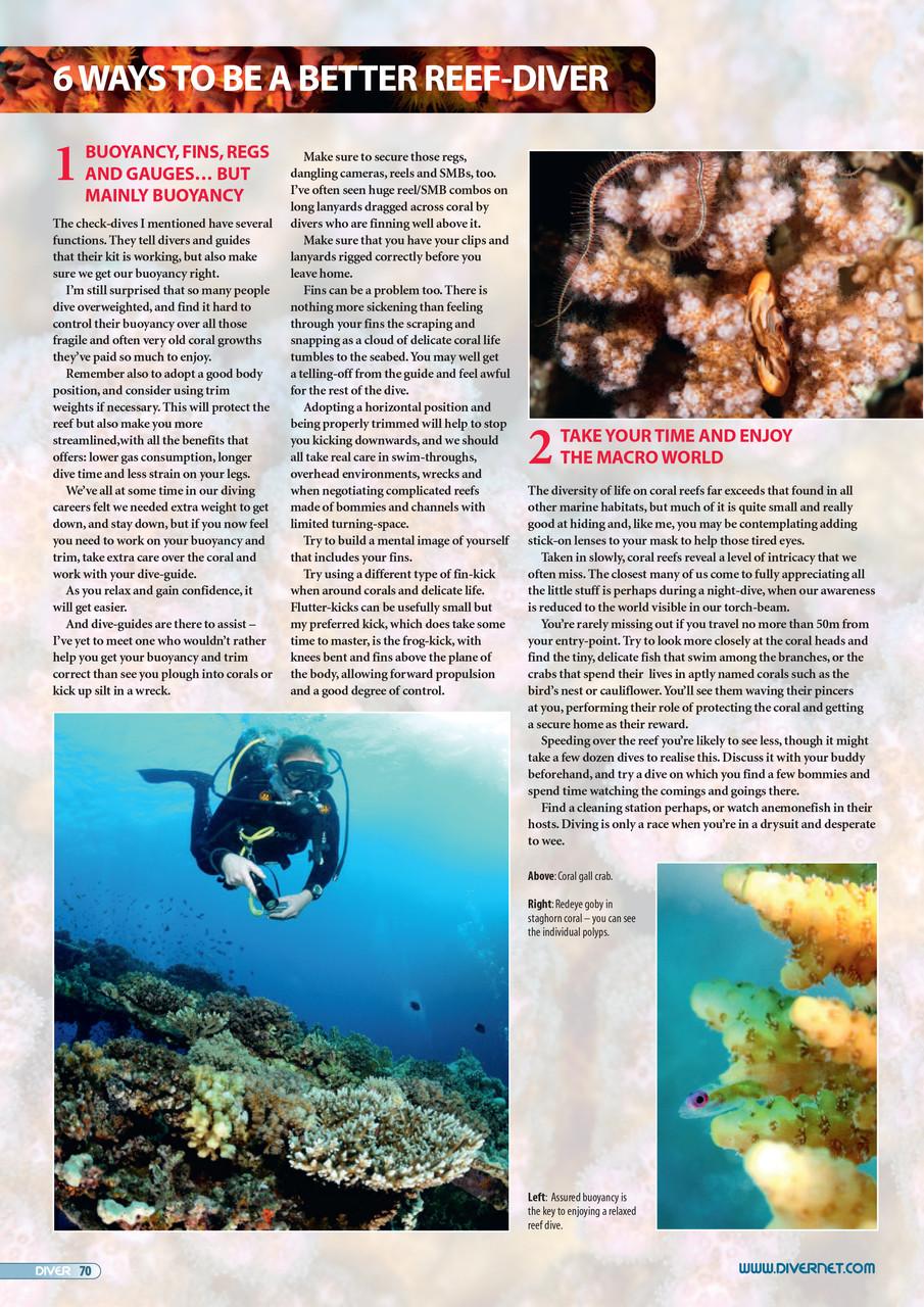 Coral-Sensitive-2
