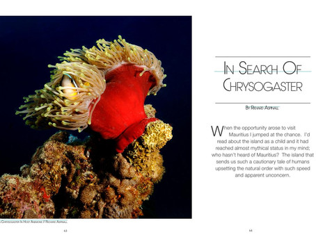 72&Rising magazine feature: In search of Chrysogaster