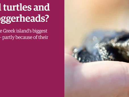 The Guardian: Will turtles and tourism always be at loggerheads?