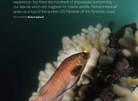 Coast magazine feature: Dive into Discovery