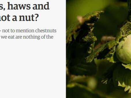 The Guardian: Hips, haws and drupes: when is a nut not a nut?