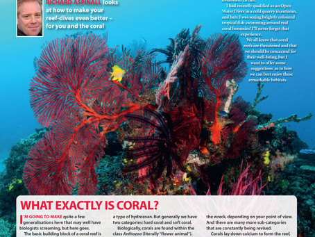 Diver magazine feature:  How to be considerate on the reef