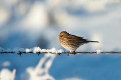 Wildlife photo by Richard Aspinall