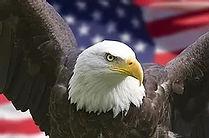 Eagle 2021