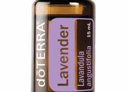 "Lavender ""Lavandula angustifolia"""