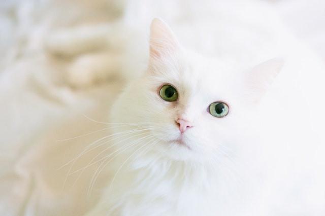 cat 10.jpg