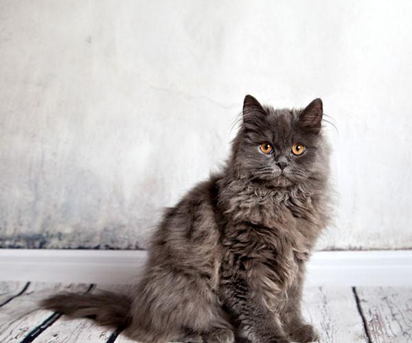 cat5 poor resolution