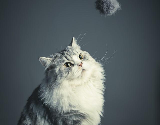 cat 9 poor resolution