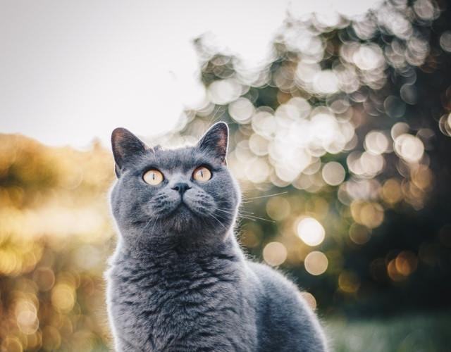 cat 8 poor resolution