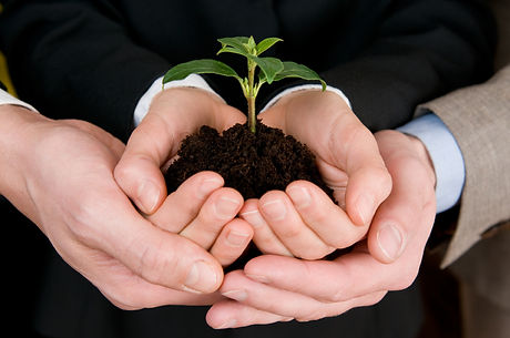 plant in hands.jpg