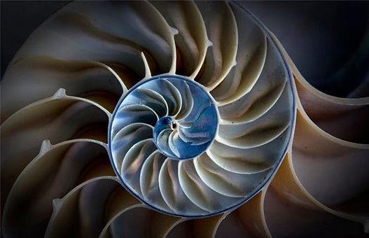 christo_uchigroup.com shell.jpg