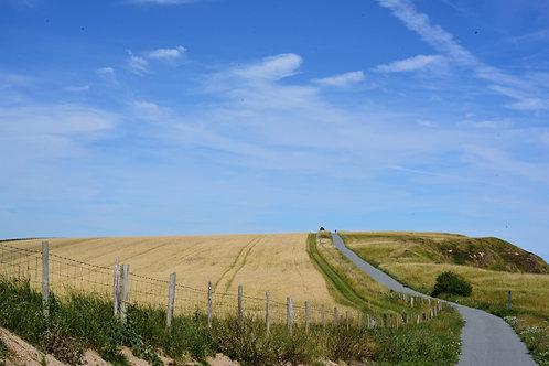 'Fields of Wheat' Photo Print