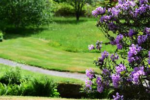 Purple Framed Path (W).jpg