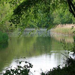 Hardwick River Ripple June 2016.JPG