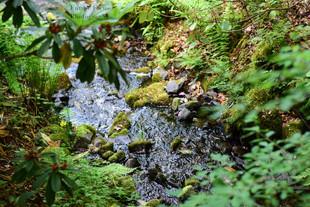 Where the river flows (W).jpg