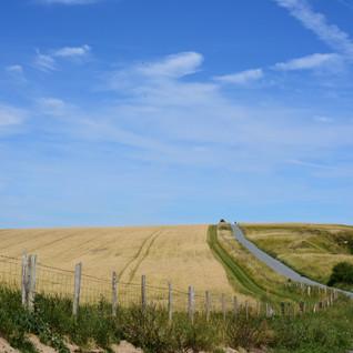 Fields of wheat 14.7.2020.JPG