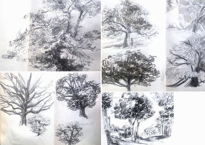 marijo foehrle arbres dessin.jpg