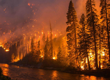 Wildfires and our world