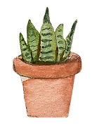 watercolor illustration of an indoor house plant (a Snake plant) in a clay pot