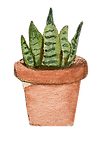 watercolor illustration of a house plant (a snake plant) in a terra cotta pot
