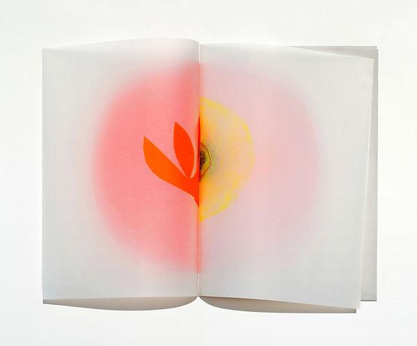 1 Il libro dei fiori, 1997, 41x56x4 cm