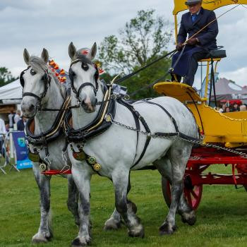 Roll up, roll up ...a day out at the Rutland County Show