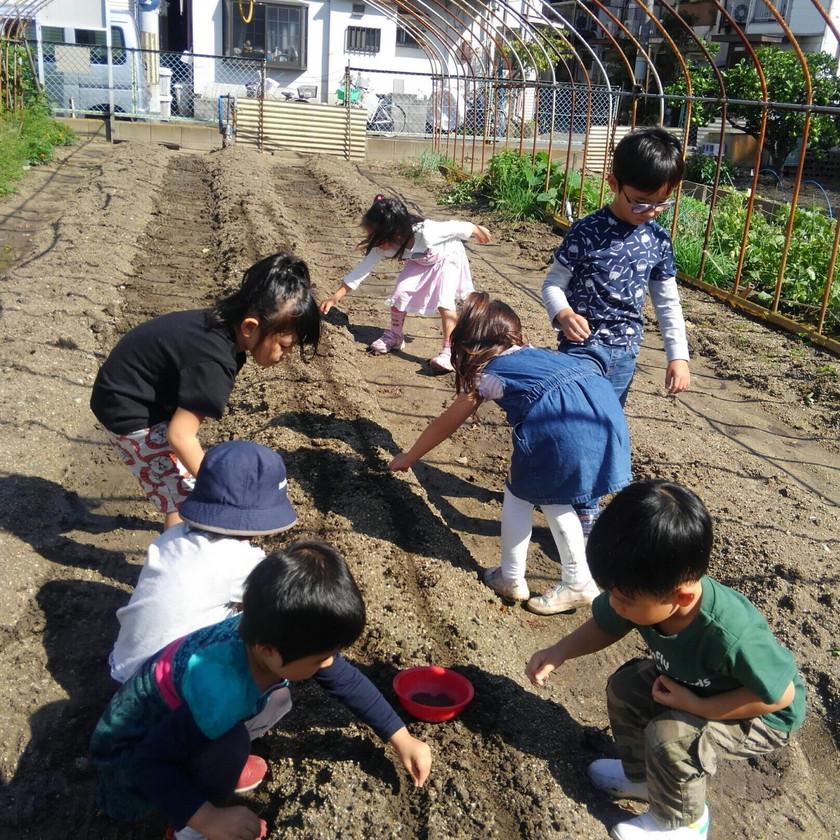 Edible School Yard 美味しい校庭で種まき