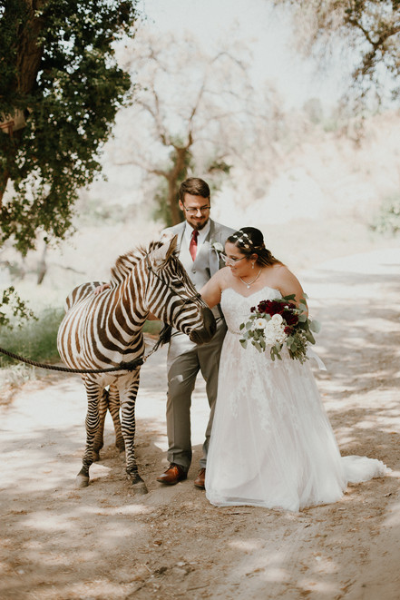bride and groom petting a zebra at Reptacular Ranch