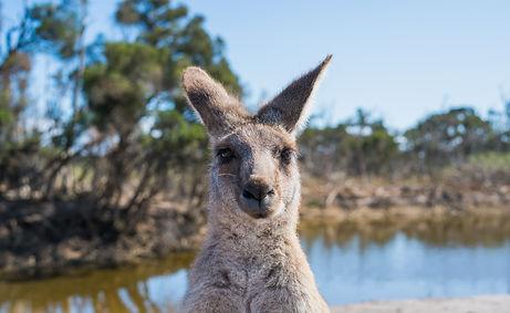 animal-animal-photography-australia-2122