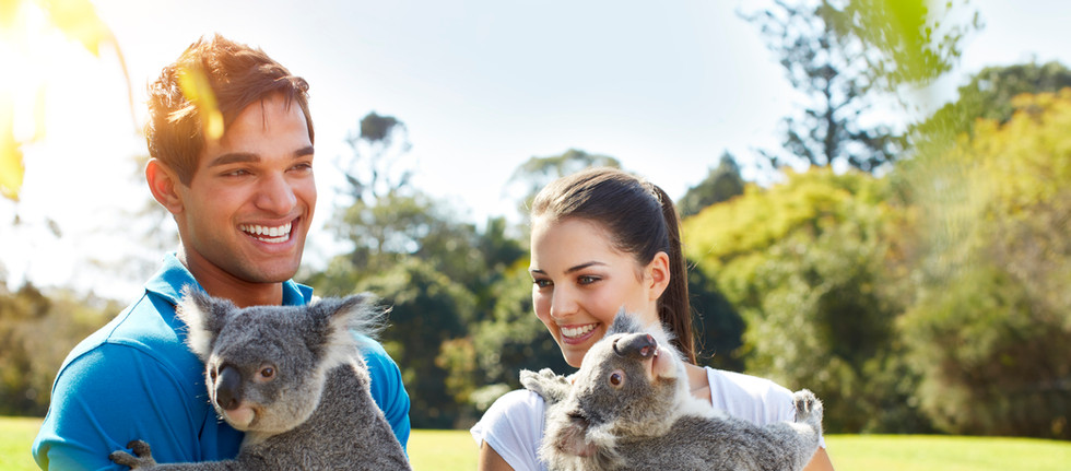 Koalas - Lone Pine Koala Sanctuary