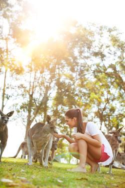 Kangaroo feeding - Lone Pine Koala Sanctuary