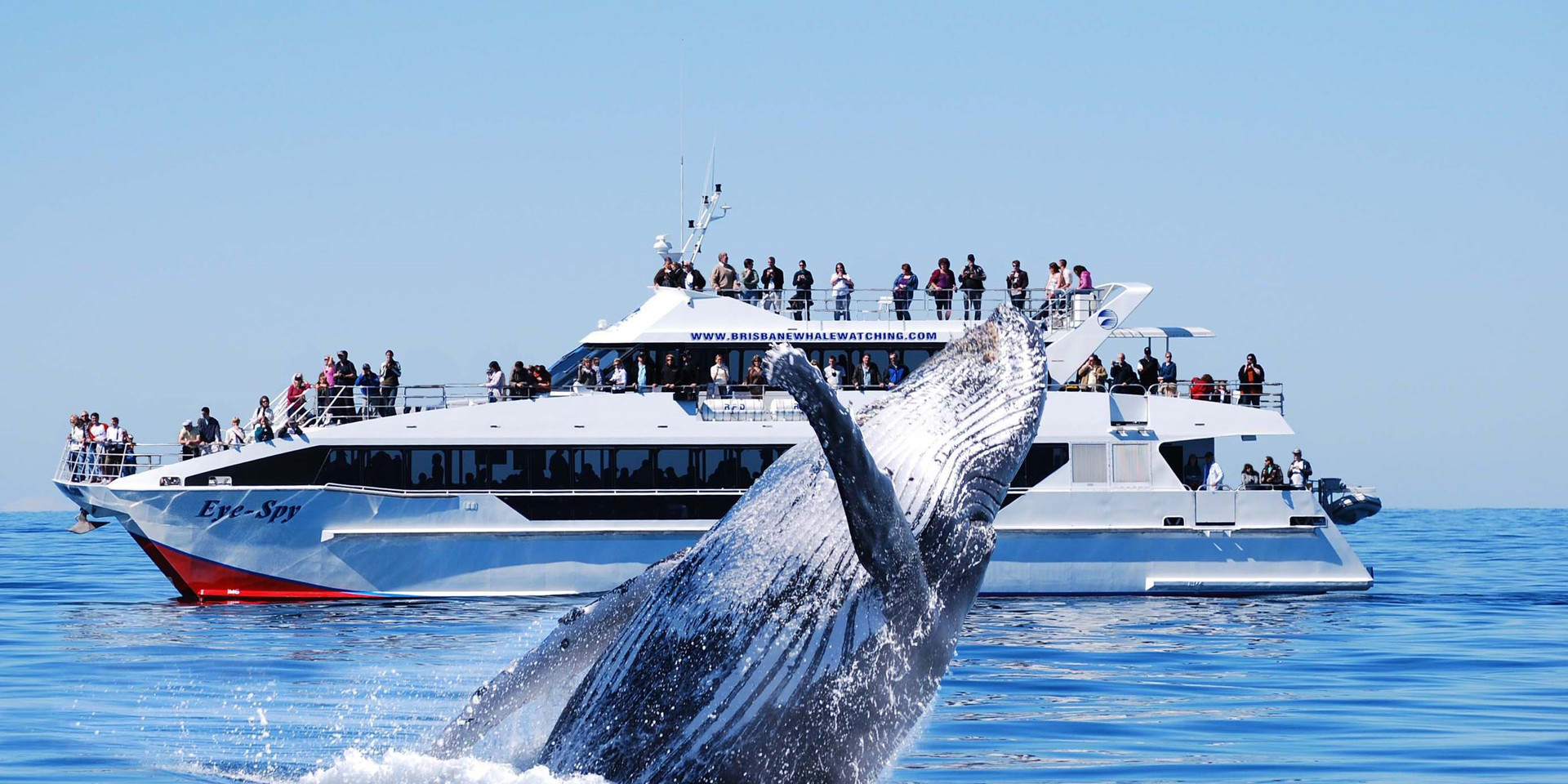 Brisbane Whale Watching