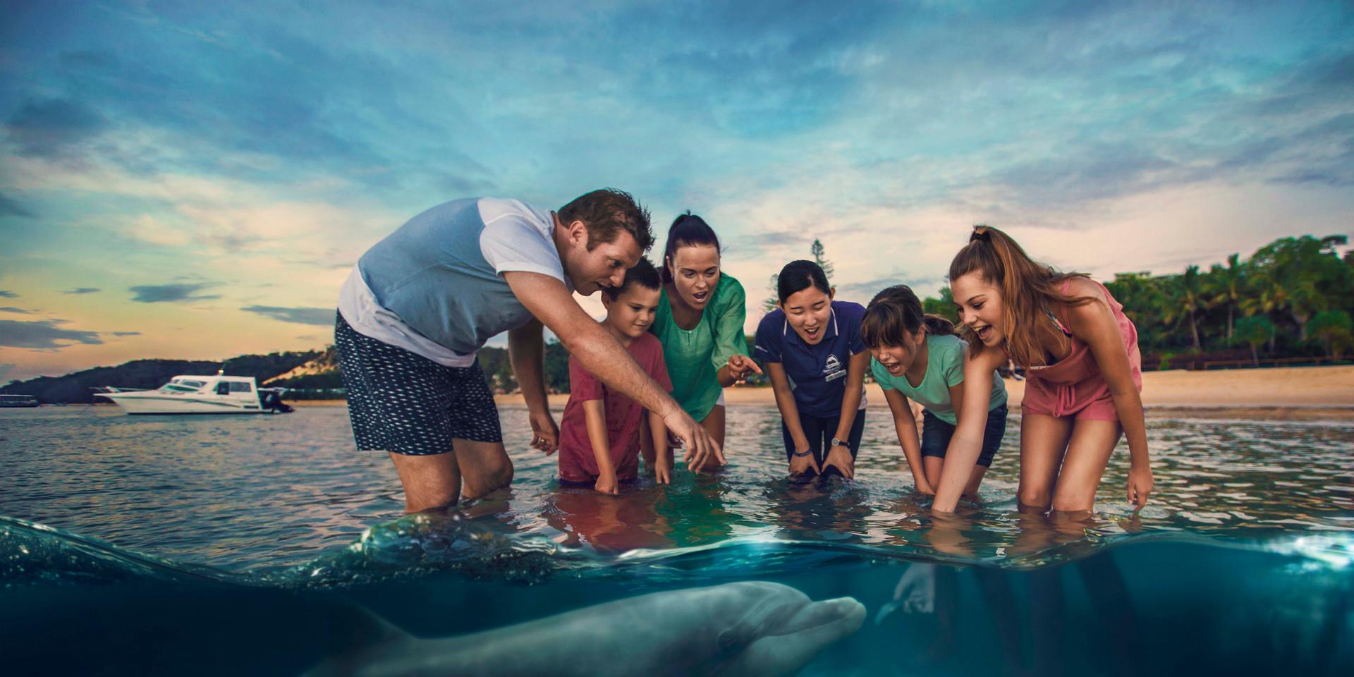Dolphin Feeding - Tangalooma Island Resort